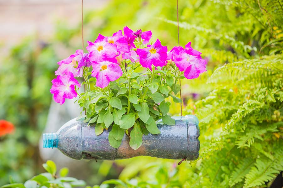 Plastic bottle being used as a planter