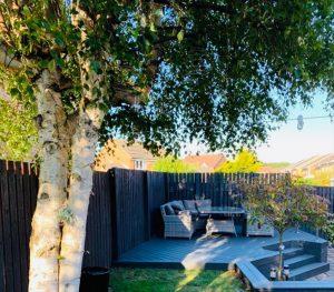 Trex deck under a tree